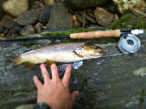 Brown Trout on the Davidson River. Pisgah National Forrest, NC